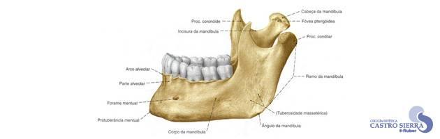 maxilofacial-glosario